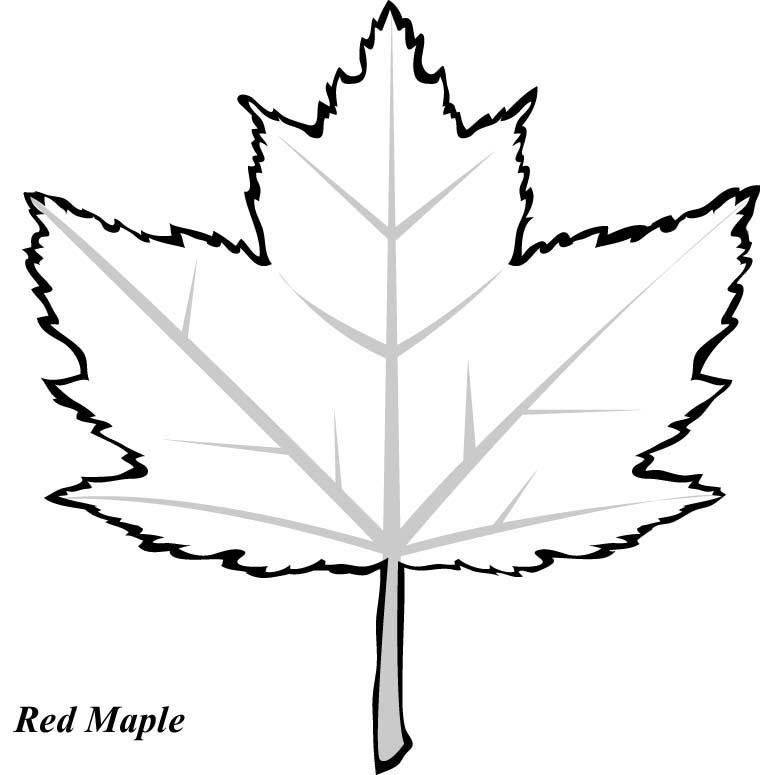 Free Oak Leaf Graphic, Download Free Clip Art, Free Clip
