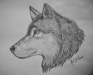wolf drawings wolves drawing draw cool awesome deviantart things pencil related wolfs clipart anime snow clip library suggestions keywords cartoon