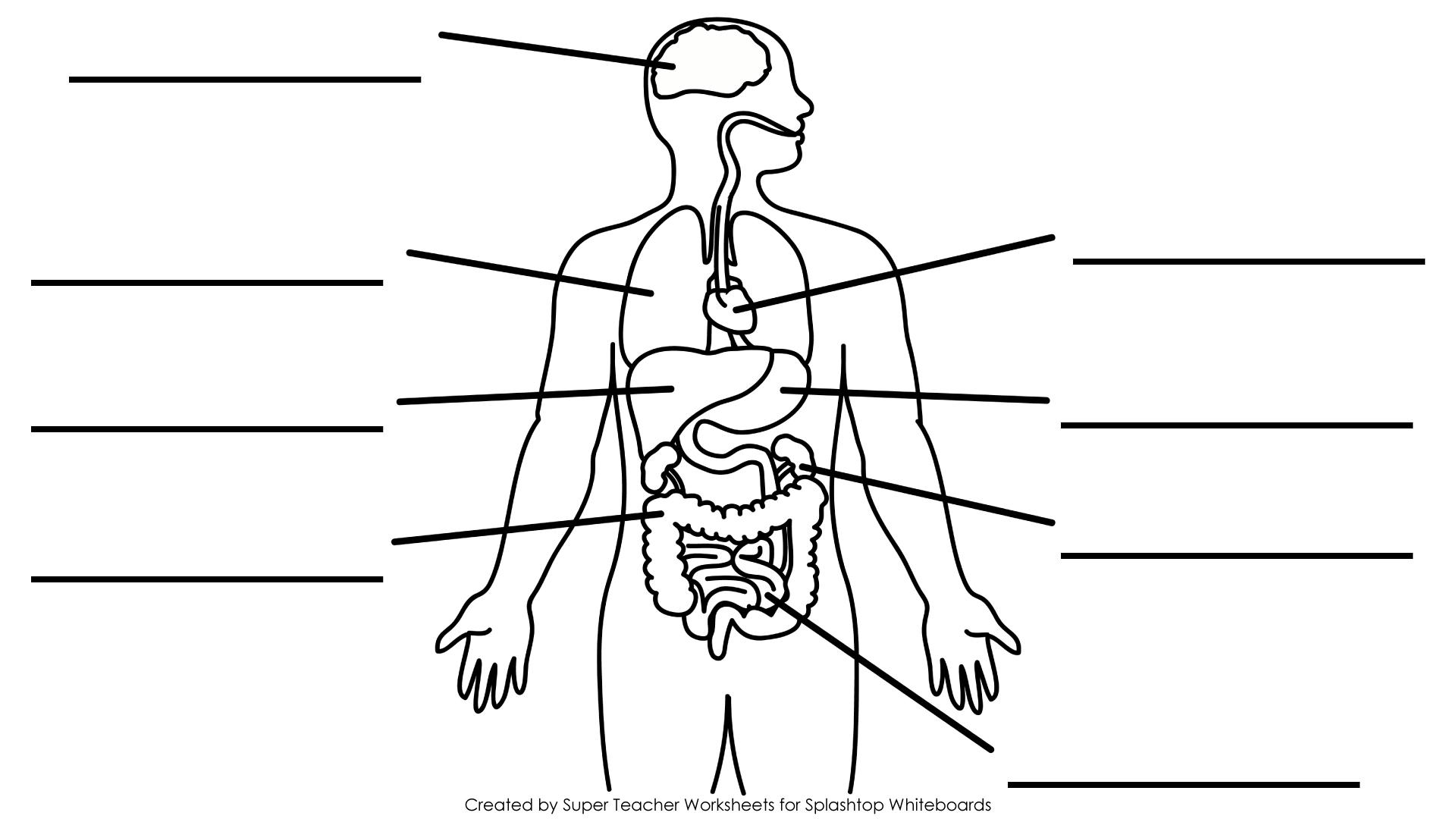 the human skeleton diagram fill in blanks wiring for fender strat 5 way switch free printable blank brain download clip art on splashtop whiteboard background graphics