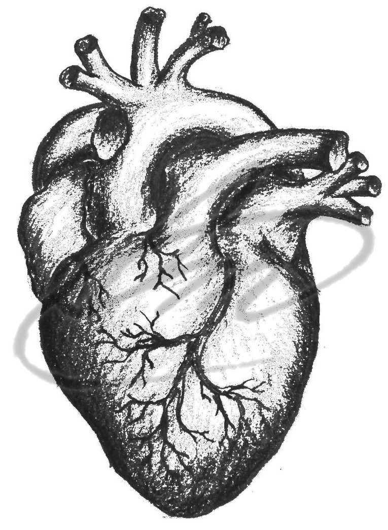 Real Heart Drawing : heart, drawing, Heart, Sketch,, Download, Clipart, Library