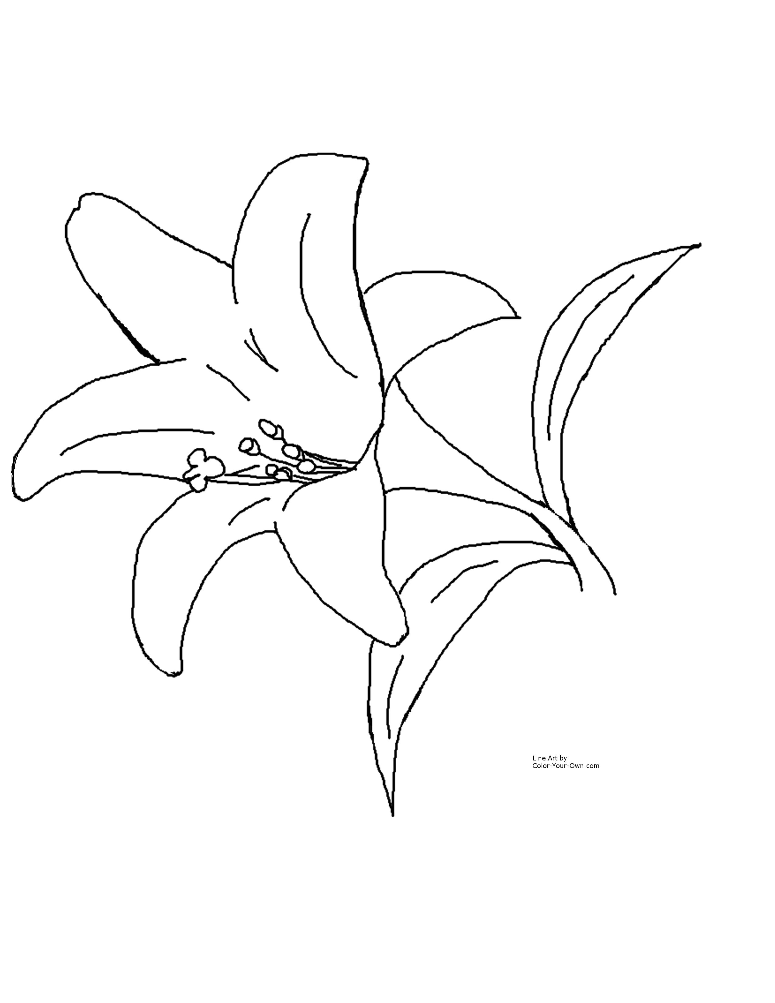 Free Easter Lily Images Download Free Clip Art Free Clip