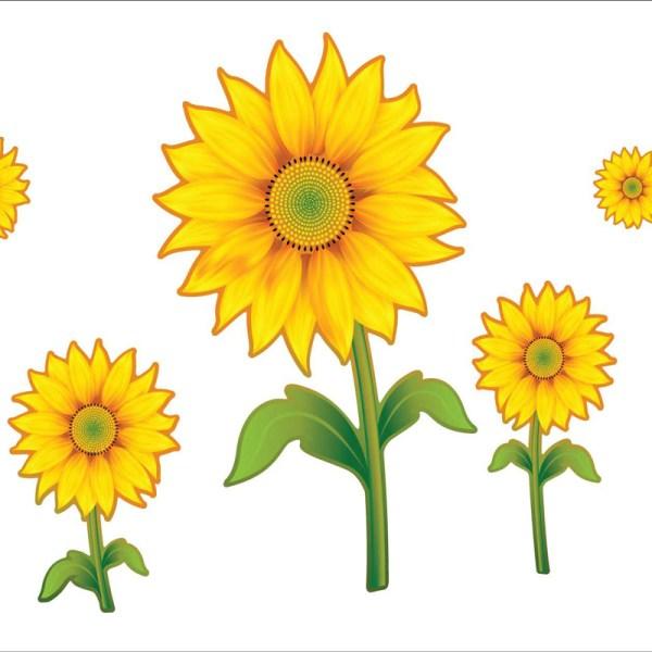 free cartoon sunflower