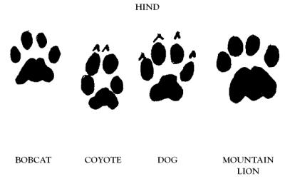 Free Texas State Bobcat Paw, Download Free Clip Art, Free