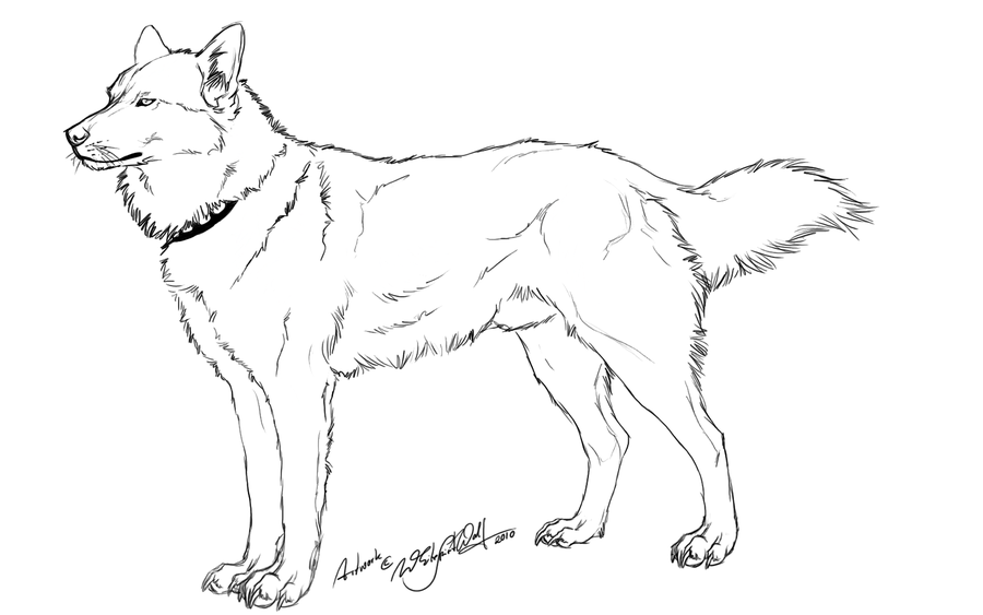 Free Husky Outline- by WhiteSpiritWolf on Clipart library
