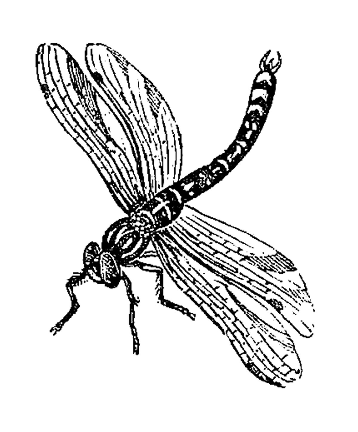 Free Queen Bee Clipart Download Free Clip Art Free Clip