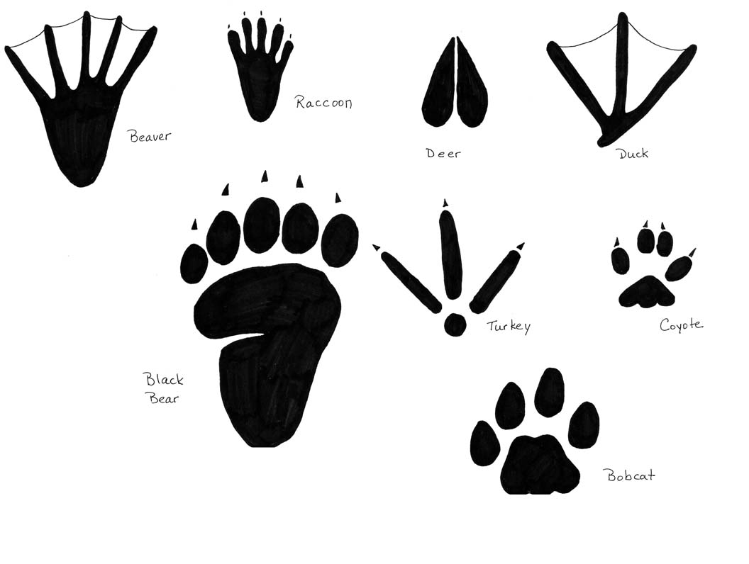 Free Free Coloring Pages Bobcat Footprint Download Free