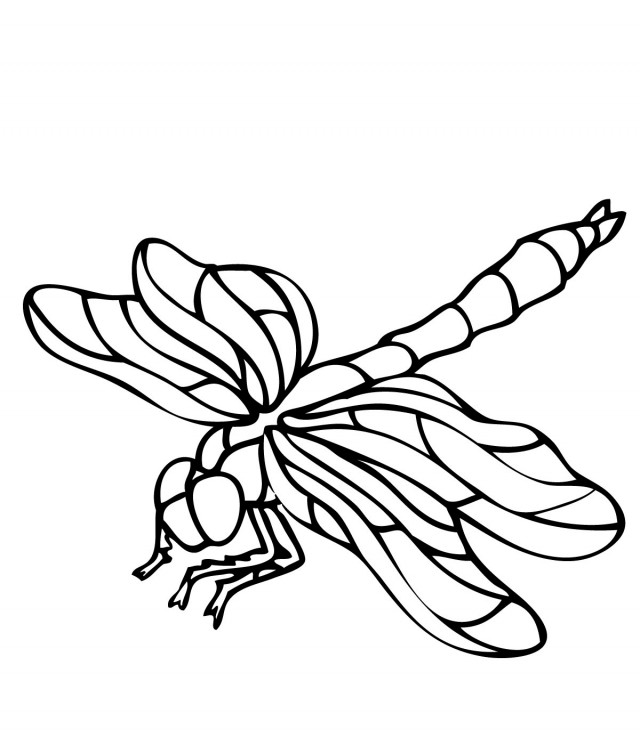 Free Cartoon Dragonfly Pictures, Download Free Clip Art