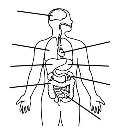 diagram of body drawing wiring diagram forward diagram of body drawing [ 1333 x 1600 Pixel ]