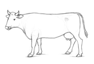 cow drawing draw pencil step sketch clipart clip easy drawings sketches factory library steps animals animal taeaeltae tallennettu learn