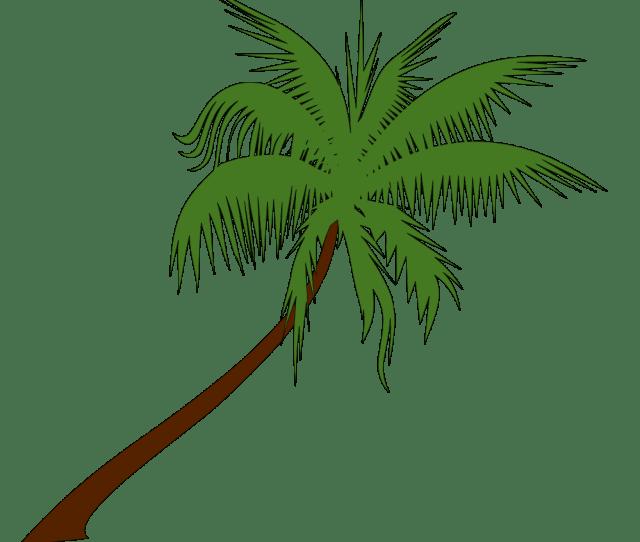 Free To Use Public Domain Palm Tree Clip Art