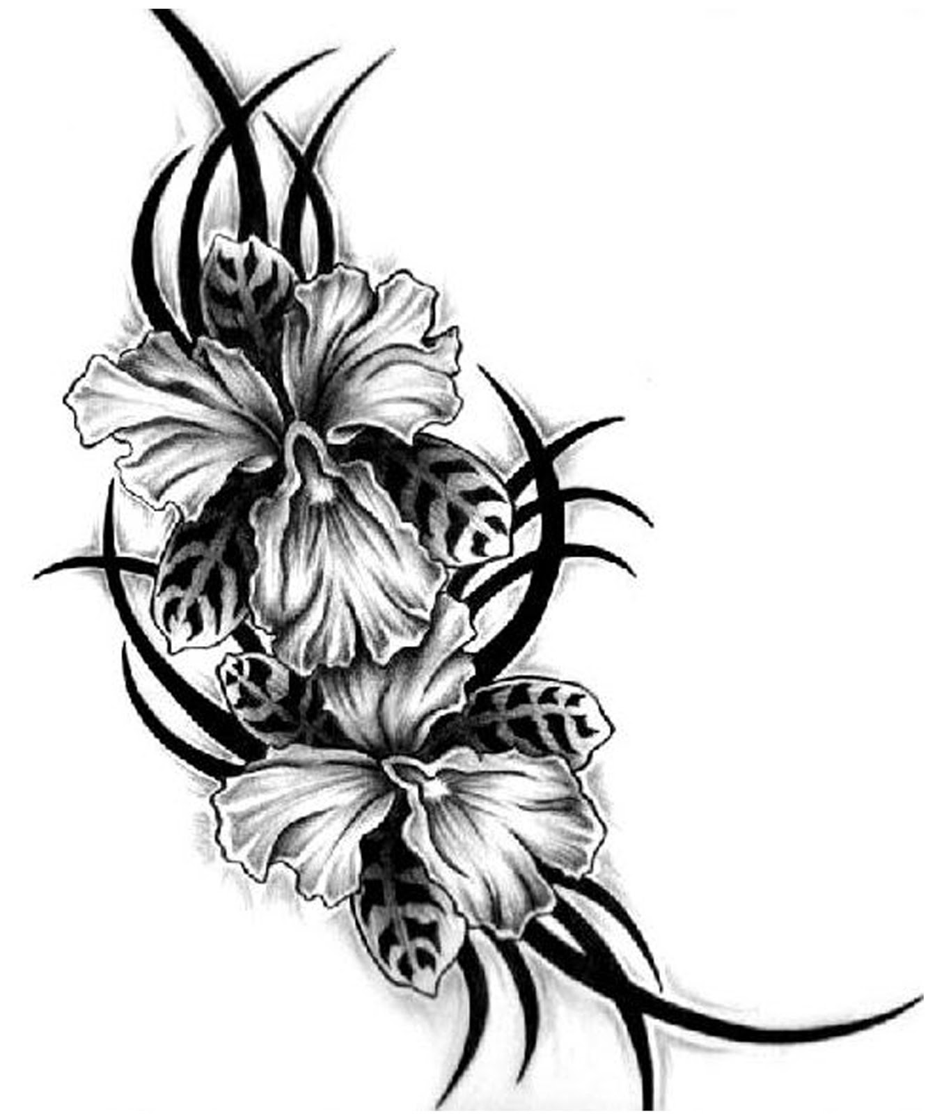 Tribal Hawaiian Flower Tattoo Images Pictures