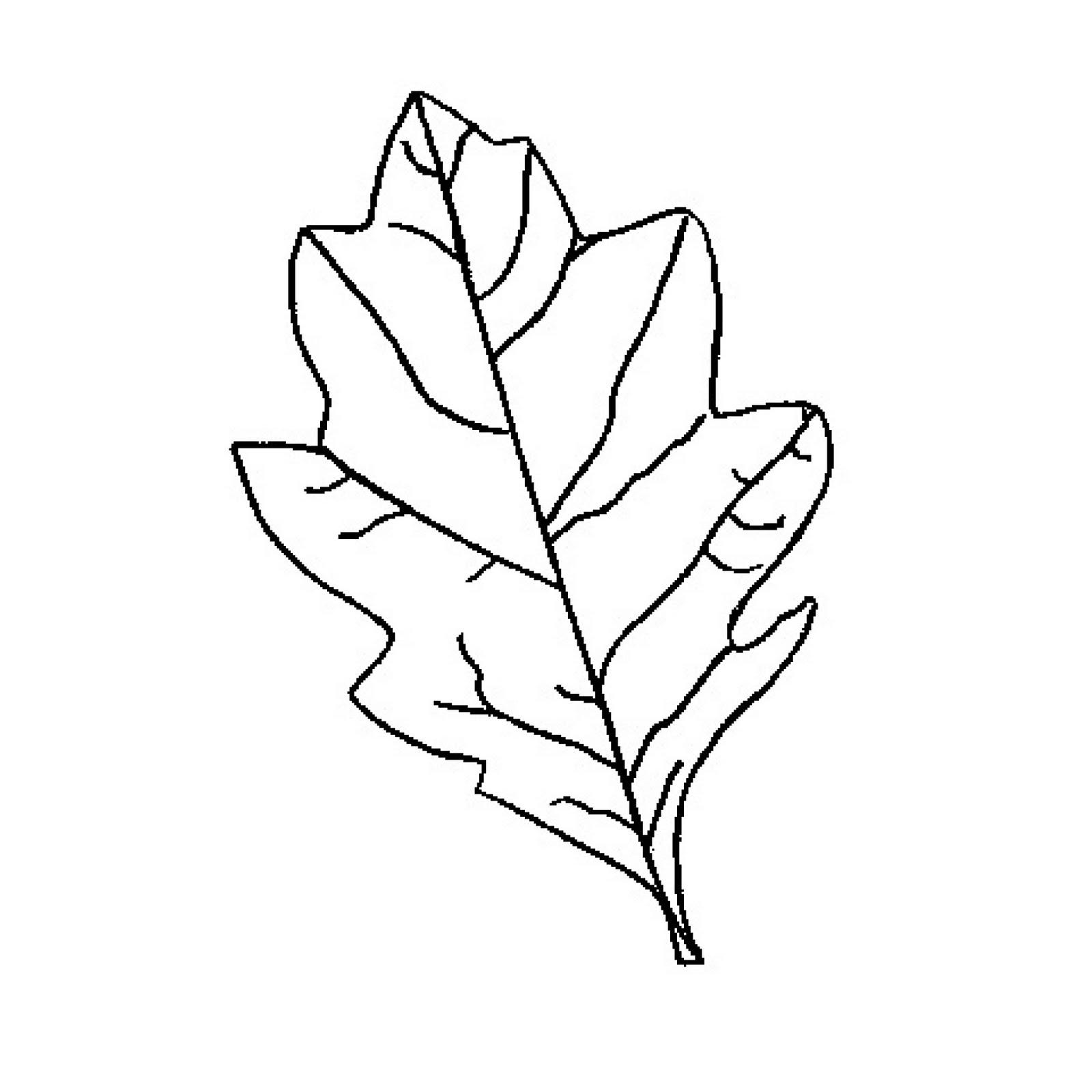 Free Oak Leaf Outline Download Free Clip Art Free Clip