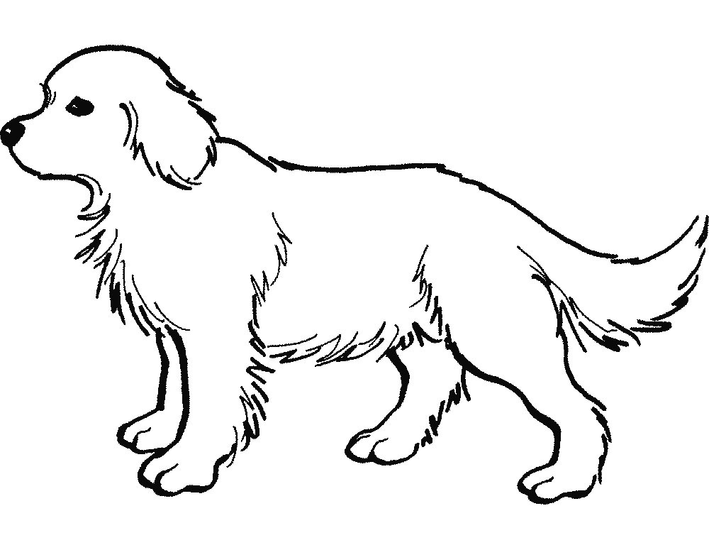 Trail Tracking Dog Harness