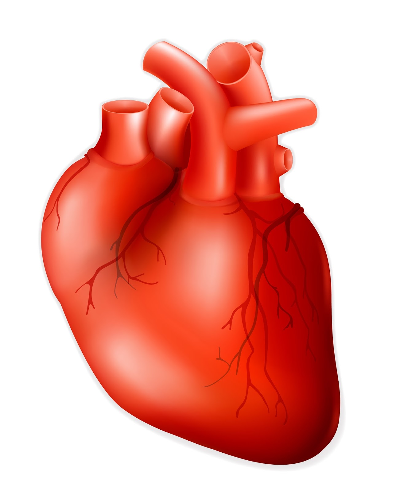 realistic heart diagram wiring for 3 gang 2 way light switch free real human hearts download clip art