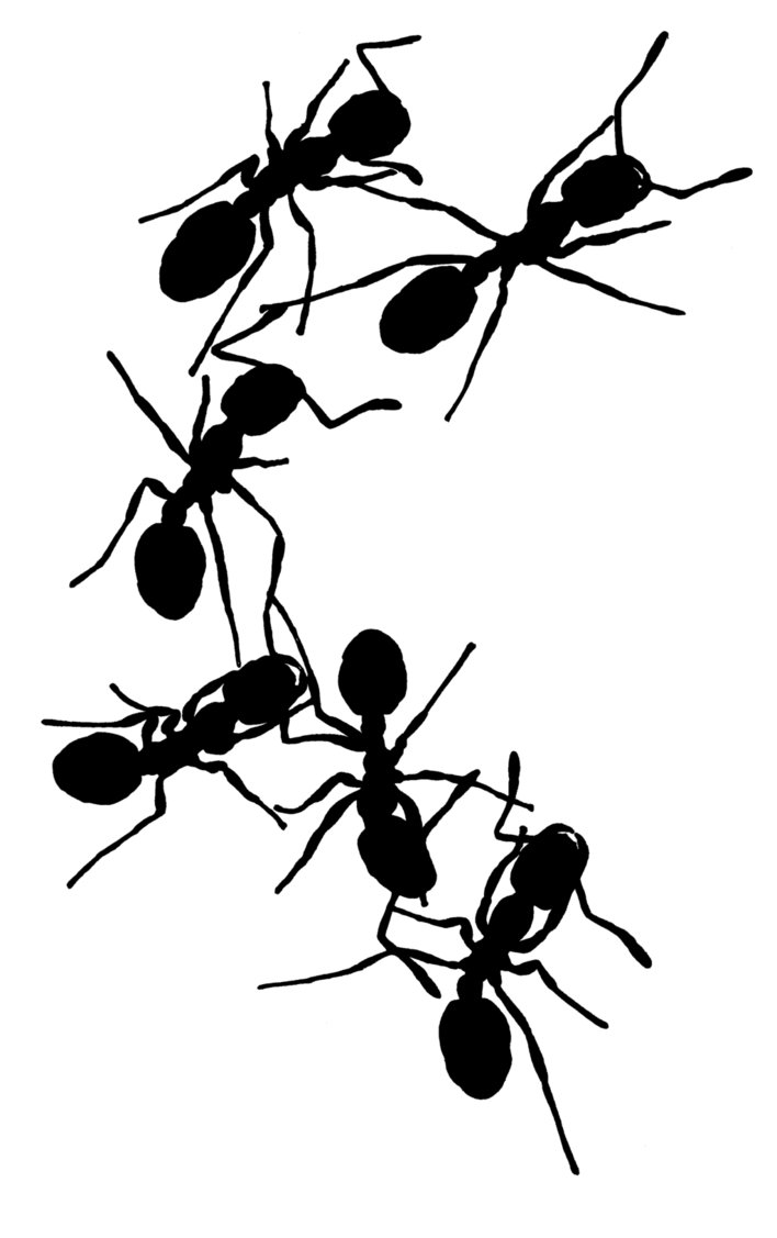 Free Pictures Of Ants For Kids, Download Free Clip Art