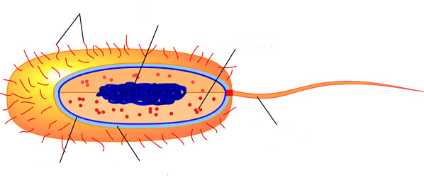 Labeled Plant Cell Structure Diagram