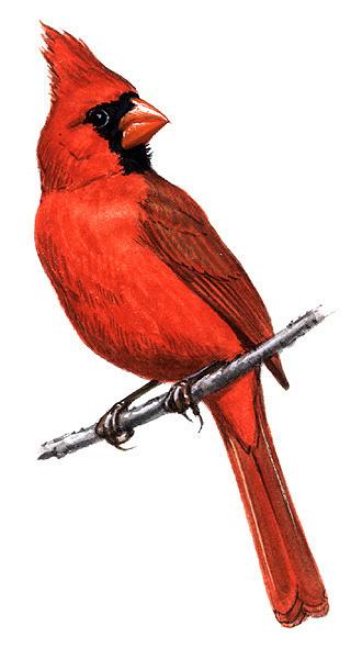 free ohio state bird