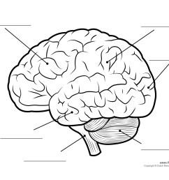 the human brain diagram jpg [ 1500 x 1161 Pixel ]