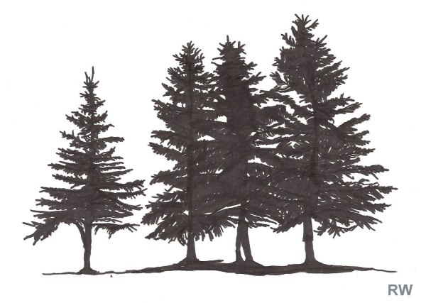 20 Pine Tree Drawing Tumblr Pictures And Ideas On Meta Networks