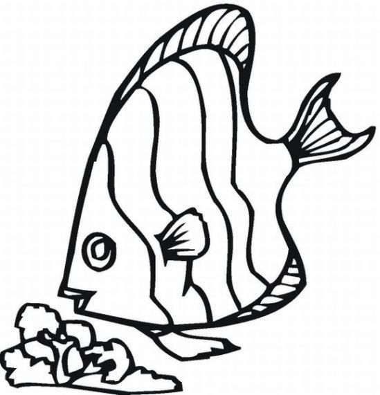 Free Fish Outlines For Children, Download Free Clip Art