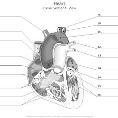 Label Heart Diagram Worksheet Answers Rotary Dial Telephone Wiring Free Unlabelled Of The Download Clip Art Cross Sectional View Human Unlabeled