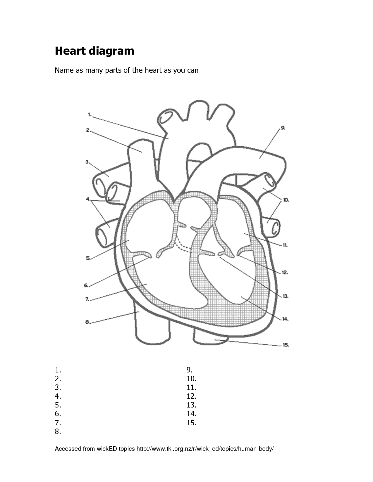 Heart Diagram Practice
