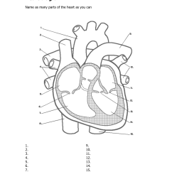 Unlabeled Heart Diagram Cross Section Mk4 Jetta Headlight Switch Wiring Free Human Sketch Download Clip Art Related Keywords Suggestions Long
