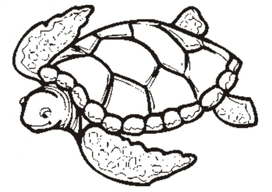 Free Sea Turtle Illustration, Download Free Clip Art, Free