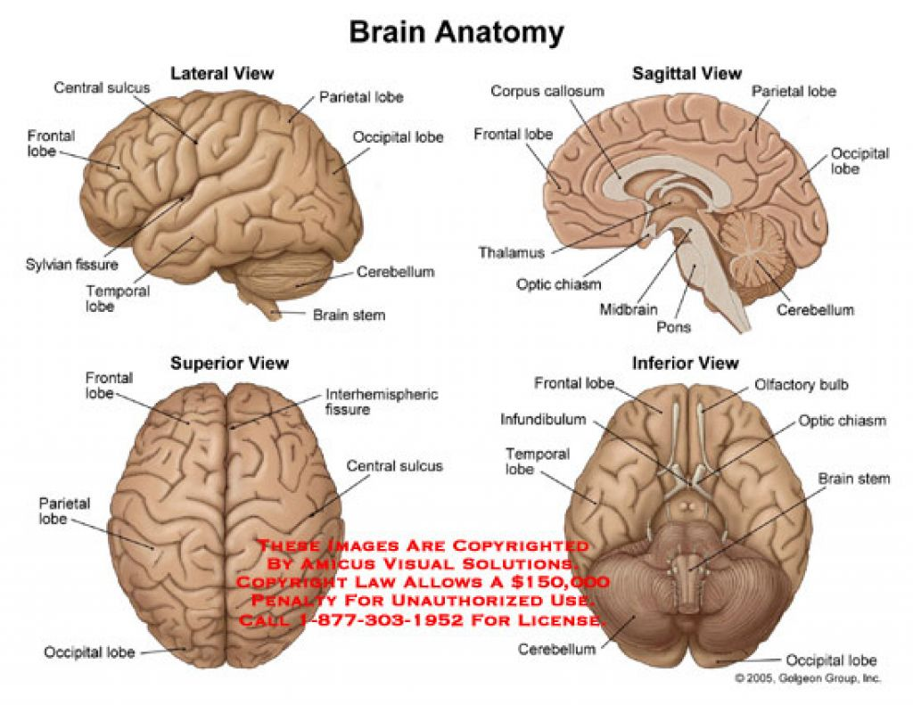 hight resolution of brain diagram 1647708 license personal use