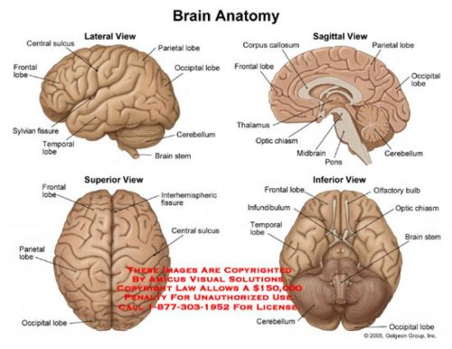 small resolution of brain diagram 1647708 license personal use