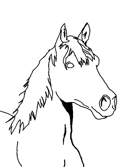 Horse Sketch Drawing