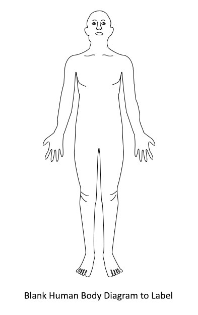 Free Blank Body, Download Free Clip Art, Free Clip Art on