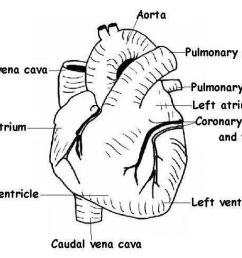 blank heart diagram 1664347 license personal use  [ 1024 x 779 Pixel ]