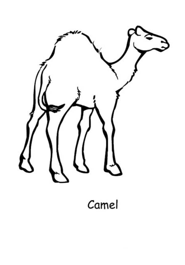 Printable Camel Coloring Page And Footprints Coloring Pages