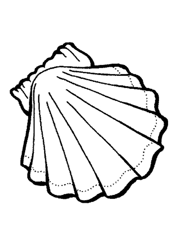 Free How To Draw A Conch Shell, Download Free Clip Art