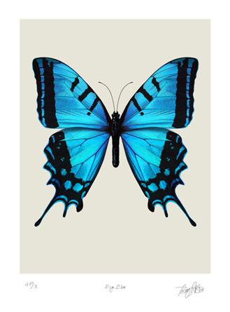 Snow Falling Gif Wallpaper Free Blue Butterfly Download Free Clip Art Free Clip Art