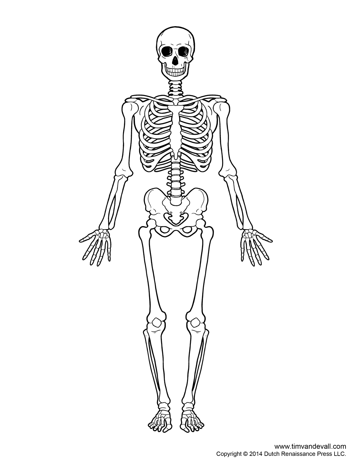 hight resolution of Free Kids Skeleton Drawing