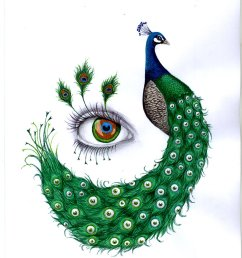 peacock drawing with colour gallery [ 900 x 1238 Pixel ]