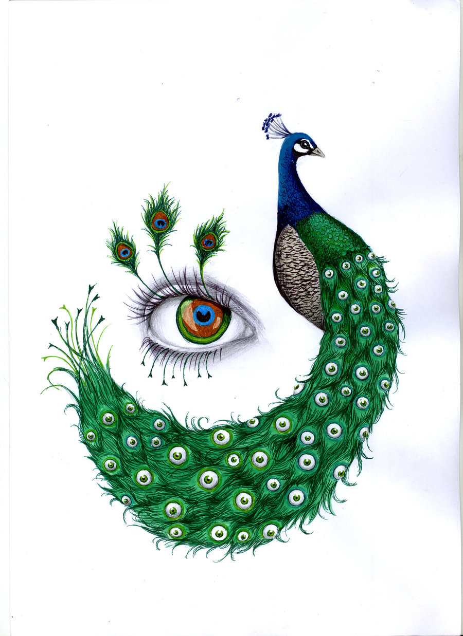 hight resolution of peacock drawing with colour gallery