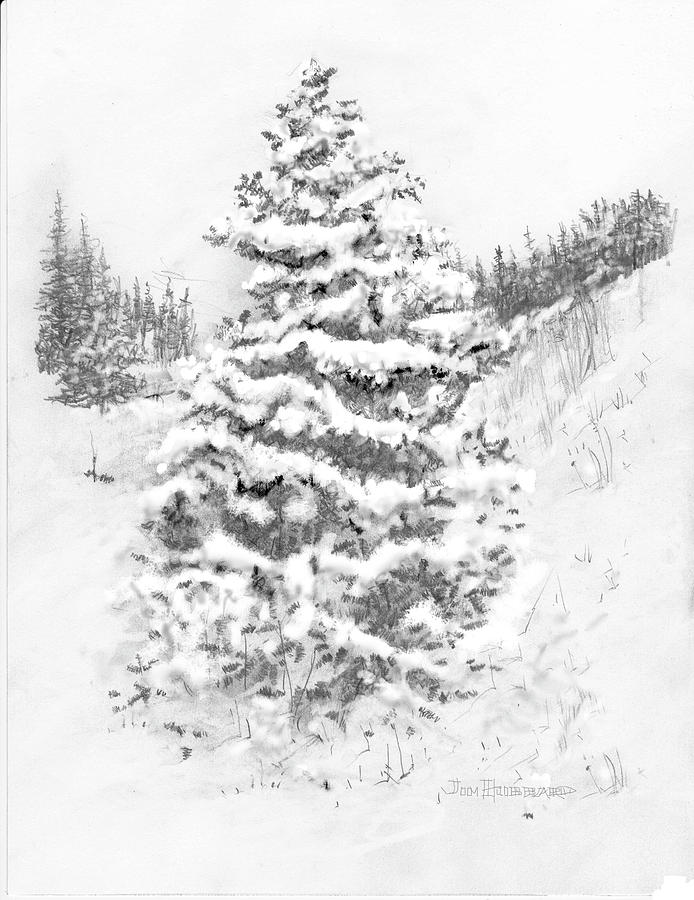 Free Spruce Drawing, Download Free Clip Art, Free Clip Art