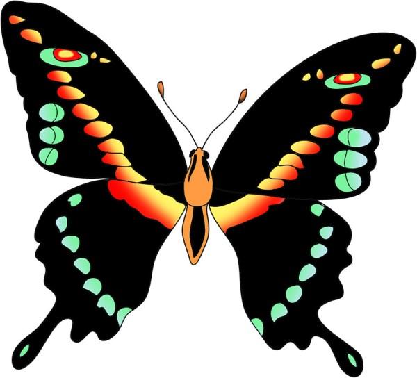 free butterfly black