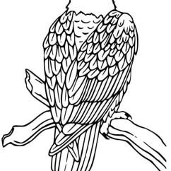 Bird Diagram Unlabeled 7 Pin Trailer Socket Wiring Ireland Free Bald Eagle Illustration, Download Clip Art, Art On Clipart Library