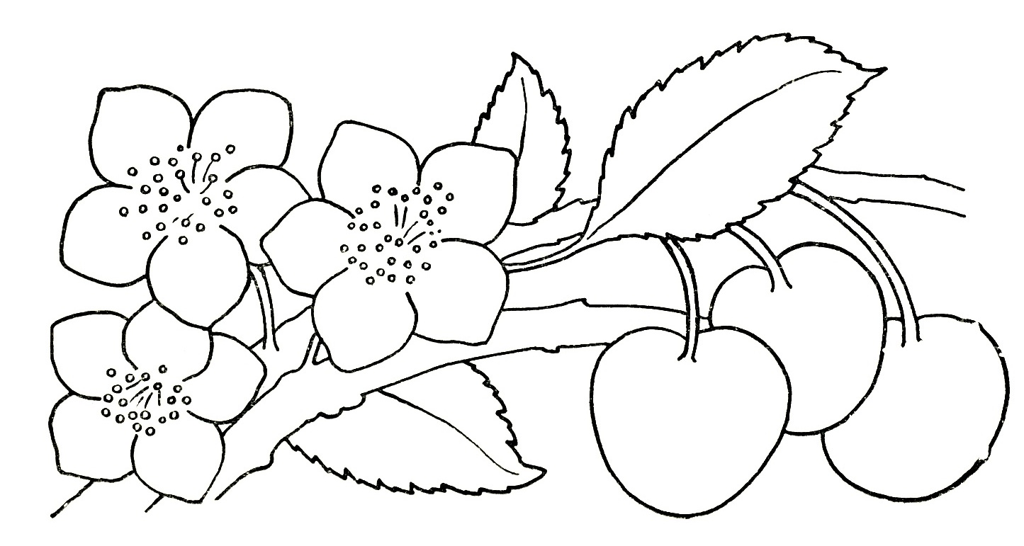 Free Drawing Of Flowers Download Free Clip Art Free Clip