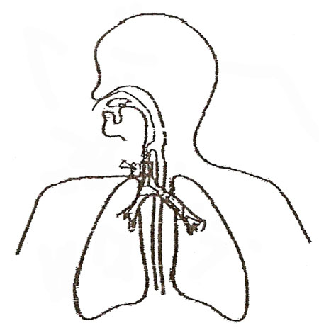 Free Respiratory System Blank Diagram, Download Free Clip
