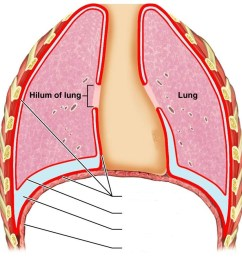 pix for lung diagram unlabeled [ 922 x 916 Pixel ]