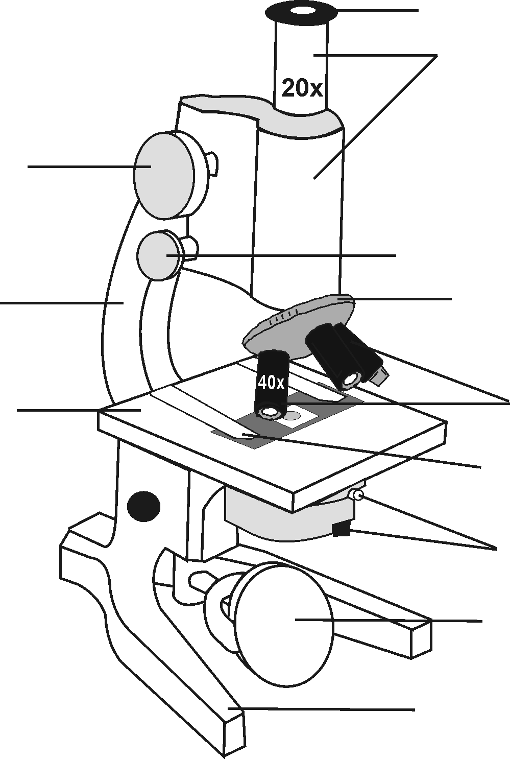 compound microscope diagram and functions 1986 chevy truck power window wiring free drawing, download clip art, art on clipart library
