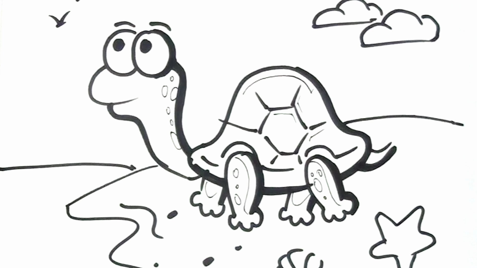 How To Draw A Turtle Cartoon