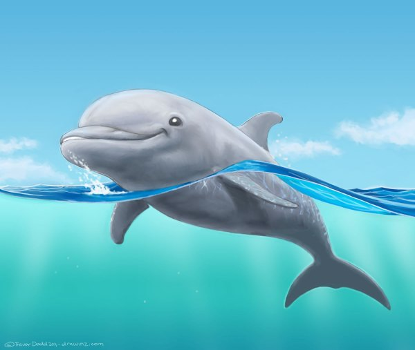 Dolphin Drawings Paintings