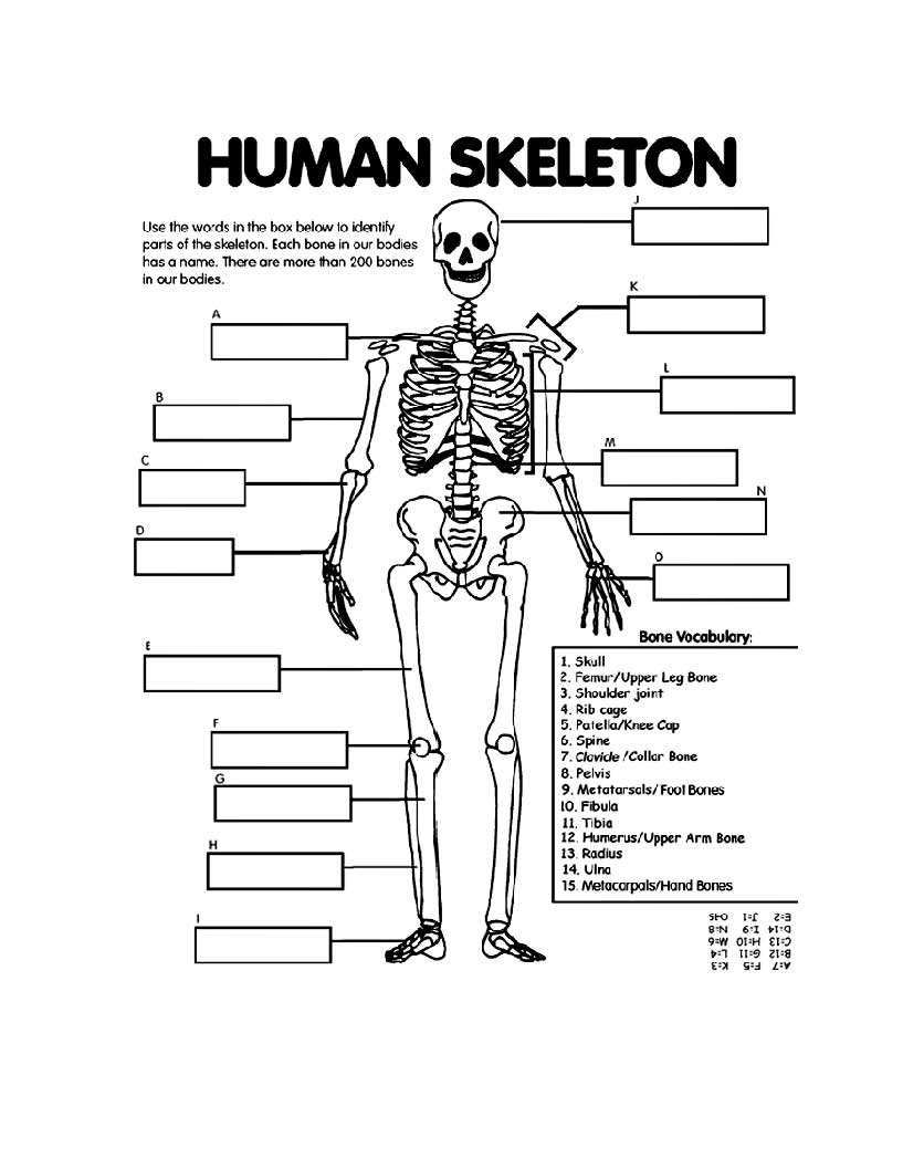 hight resolution of images for skeleton drawing for kids