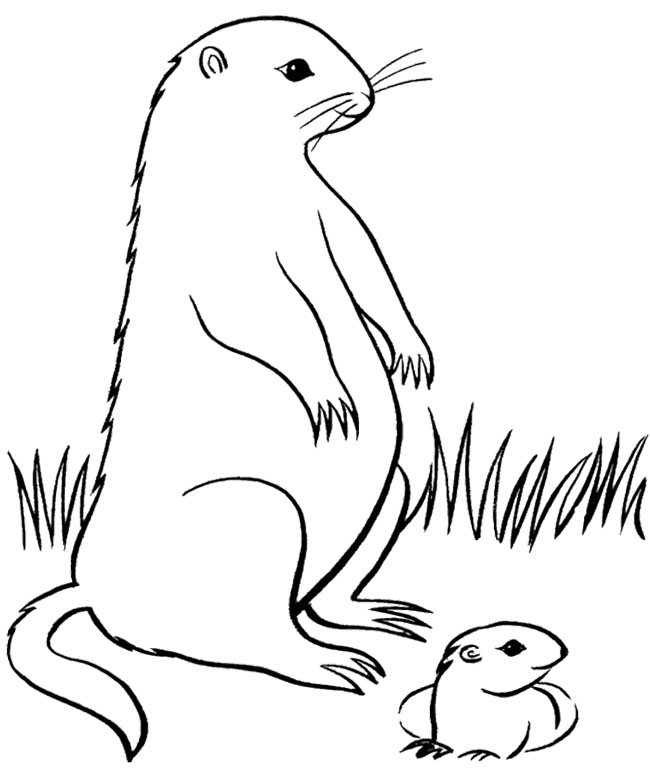 Free Groundhog Pictures Free, Download Free Clip Art, Free